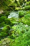 Kleiner Gebirgswasserfall auf den Felsen bedeckt mit dem Moos tief im Waldberuhigenden Naturhintergrund Weicher Fokus Stockbilder