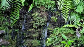 Kleiner gefälschter Wasserfall im Garten, der durch Anlagen umgibt stock video