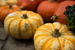 Kleiner gelber Autumn Pumpkins Lizenzfreie Stockfotografie