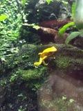 Kleiner gelber Frosch Stockfotos