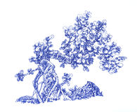 Kleiner Geld-Baum Stockbild