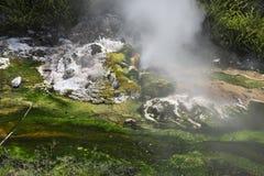 Kleiner Geysir im Waimangu-Fluss stockfotos