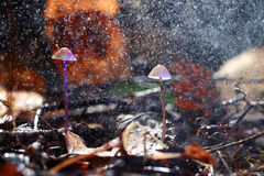 Kleiner giftiger Pilz Stockbilder
