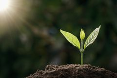 kleiner grüner Baum, der im Garten mit Sonnenlicht wächst eco lizenzfreies stockfoto