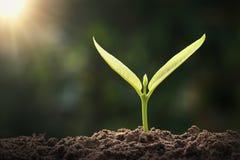kleiner grüner Baum, der im Garten mit Sonnenlicht wächst eco lizenzfreies stockbild