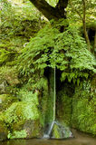 Kleiner grüner Wasserfall Lizenzfreie Stockfotos