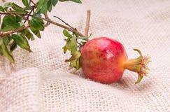 Kleiner Granatapfel Lizenzfreie Stockfotos