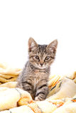 Kleiner grauer Kätzchenblick auf Kamera auf einer weichen gelben Decke Stockfotos