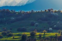 Kleiner Hügel gegen einen großen Berg bedeckt im Schnee mit dem Sonnenlicht casted auf ihm mit den Bäumen, die im Frühjahr blühen lizenzfreie stockbilder