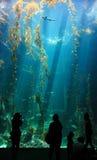 Kleiner Haifisch im Ozean Stockbilder