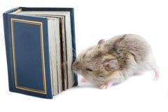 Kleiner Hamster wünscht Wissen. Lizenzfreie Stockfotografie