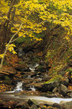 Kleiner Herbst-Wasserfall Stockbilder