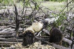 Kleiner Holzfäller Stockbild
