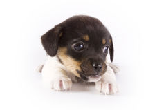 Kleiner Hund stockfotografie