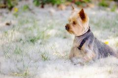 Kleiner Hund stockfoto