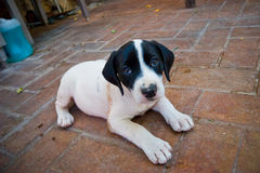 Kleiner Hund stockfotos