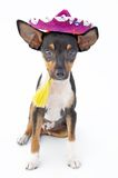 Kleiner Hund Lizenzfreie Stockbilder
