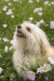 Kleiner Hund auf dem Blumengebiet. Lizenzfreies Stockfoto