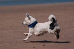 Kleiner Hund auf dem sandigen Strand stockfotos