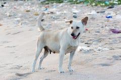 Kleiner Hund auf schmutzigem Strand für Verschmutzungsideenkonzept Lizenzfreie Stockfotografie