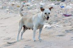 Kleiner Hund auf schmutzigem Strand für Verschmutzungsideenkonzept Lizenzfreie Stockfotos