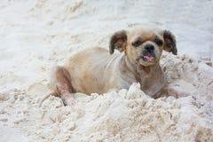 Kleiner Hund auf Strandsand Stockfotos