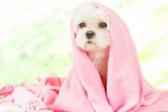 Kleiner Hund am Badekurort lizenzfreies stockbild