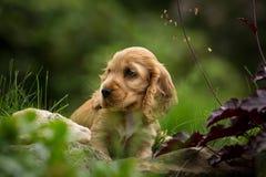 Kleiner Hund in den Blumen Stockfoto