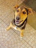 Kleiner Hund, der oben schaut Stockfoto