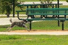 Kleiner Hund des mitten in der Luft, der hinter eine Parkbank läuft Lizenzfreie Stockbilder