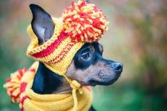 Kleiner Hund in einem Herbsthut und -schal Lustiger, lustiger Welpe Thema des Herbstes, kalt stockfotos