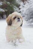 Kleiner Hund in einem schneebedeckten Wald Lizenzfreie Stockfotografie