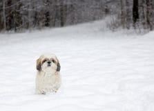 Kleiner Hund in einem schneebedeckten Wald Lizenzfreie Stockbilder