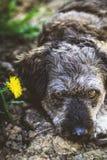 Kleiner Hund im Garten Lizenzfreie Stockfotografie
