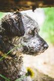 Kleiner Hund im Garten Stockfoto