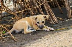 Kleiner Hund legt auf Sand nieder Nette reizende Hundemarionette allein im Hinterhof Lizenzfreie Stockfotografie