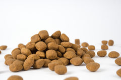 Kleiner Hund möchte essen Lizenzfreie Stockfotografie