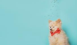 Kleiner Hund mit Bogen Raum für Text Stockbild