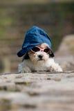 Kleiner Hund mit Hut und Sonnenbrillen ein Lizenzfreie Stockfotos