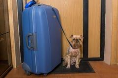 Kleiner Hund und ein großer Koffer Lizenzfreie Stockfotos