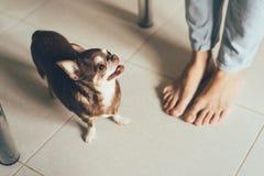 Kleiner Hund und menschliche Beine stockbilder