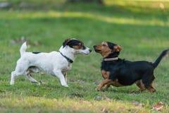 Kleiner Hund zwei Stockfoto