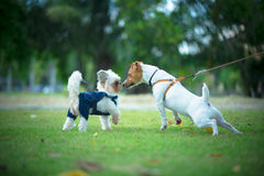 Kleiner Hund zwei Stockbild