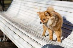Kleiner Hundespielen im Freien auf der Bank Stockbilder