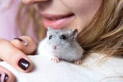 Kleiner Jungar-Hamster auf der Schulter einer Frau stockfotografie