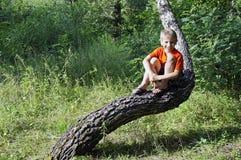 Kleiner Junge, der auf Baum sitzt Lizenzfreies Stockbild