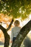 Kleiner Junge, der auf einer Niederlassung in einem Herbstbaum schaut hinunter w steht Stockfotos
