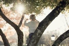 Kleiner Junge, der auf einer Niederlassung in einem Herbstbaum steht Lizenzfreie Stockfotografie