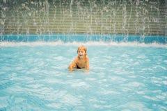 Kleiner Junge, der den Spaß läuft im Swimmingpool hat lizenzfreies stockfoto