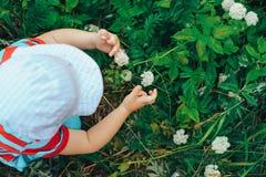 Kleiner Junge, der eine Blume auswählt Stockfotografie